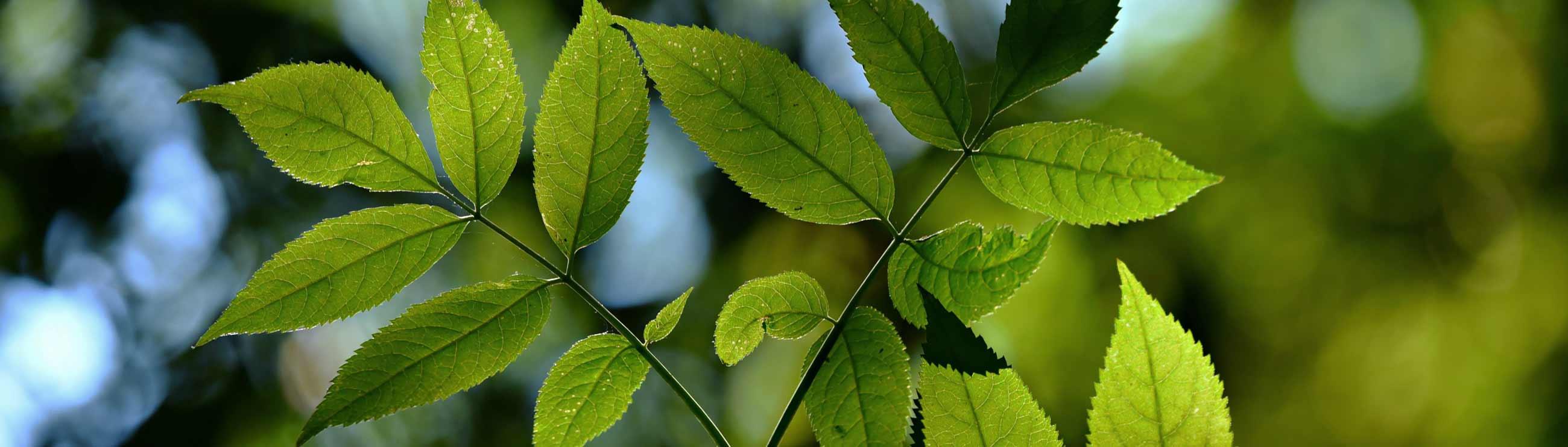 Sostenibilidad: punto limpio y reutilización